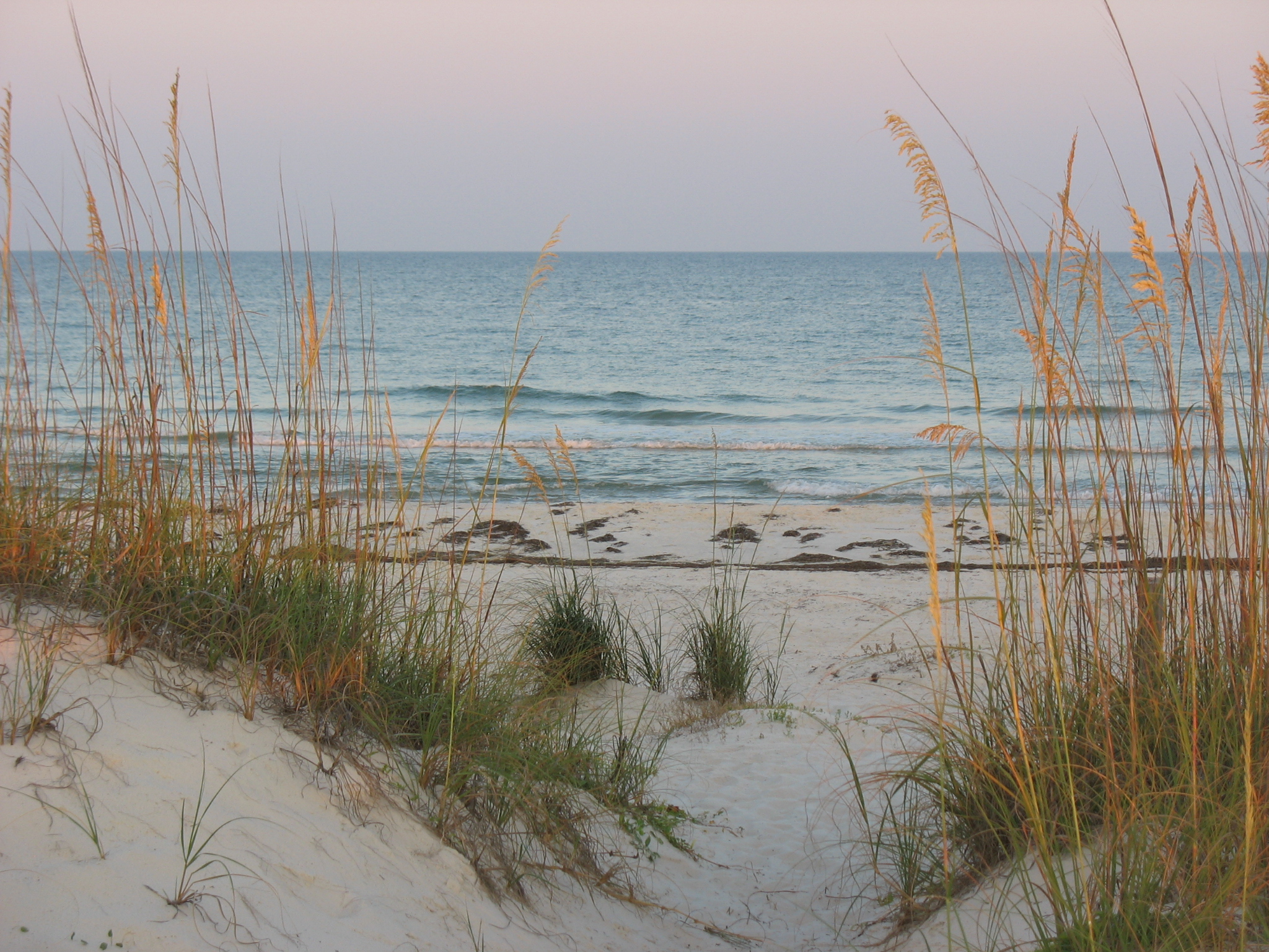 Displaying 16> Images For - Beach Grass...